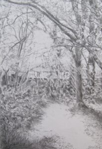 drawing of trees felled in Mitcham